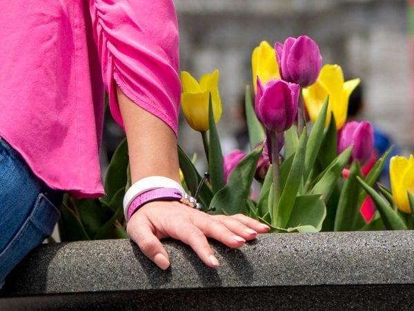 Pink cane toad bracelet